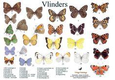 Zoekkaart Vlinders