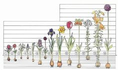 Gardening How-To – Planting & Care of Bulbs: Depth
