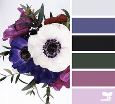 Flora Blast | Design Seeds