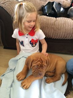 My niece with our puppy x Bordeaux Dog, Maggie Mae, Baby Sister, Sadie, Apollo, Doggies, Cute Animals, Puppies, French