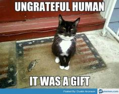 funny animals, funny animal pictures, best of funny animal pictures, funny animals pictures dumps Humor Animal, Funny Animal Memes, Funny Animal Pictures, Cat Memes, Funny Animals, Cute Animals, Funny Memes, Funniest Animals, Videos Funny
