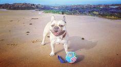 Beach time! @yummypets