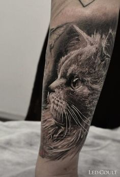 Realistic Black and Grey Cat Tattoo by Led Coult done with Alex Imeno using Ink Machines and Magic Moon Needles