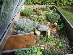 I have seen numerous suggestions for Russian tortoise diet Some great Some awful. Russian Tortoises are nibblers and appreciate broad leaf plants. Tortoise House, Tortoise Habitat, Tortoise Table, Turtle Habitat, Baby Tortoise, Sulcata Tortoise, Turtle Enclosure, Tortoise Enclosure, Hermann Tortoise