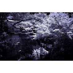 #monochrome #monocrome #monochromatic #monoart #mono_styles #mono_art #monochrome_blue #bluemonochrome #japan #japanfocus #ig_japan #ig_baoli #icu_japan #nature_lover #nature #nature_archive_ #nature_love #osaka #モノクロ #モノクローム #箕面 by yuriepoc