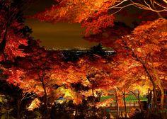 宮脇紅葉ライトアップ tsukuba,japan