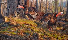 Eastern Wild Turkey Painting by Ryan Kirby Sons of Thunder