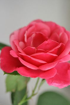 Pink rose by Craft & Creativity, via Flickr
