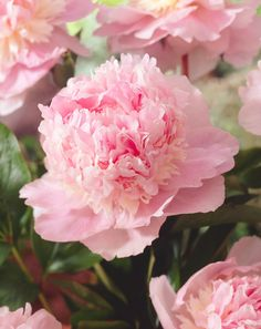 Tips for Planting Perennials in the the Fall - Bulb Blog