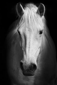 White horse Portrait. Find amazing photographic art from our carefully selected collections. Make your walls in the living room or bedroom more colorful.