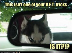funny dog pictures with captions   funny-dog-pictures-all-right-then