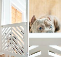 LOVE this doggy gate - full tutorial on how to make it!