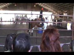 """▶ """"How To Make Your Horse Love Barrels"""" - Charmayne James Clinic Part 1 - YouTube"""