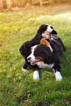 Bernese Mountain Dog Halloween costume
