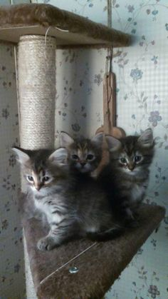 Luna & Salem with their brother at their first foster home.
