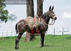 One FANCY Mule !