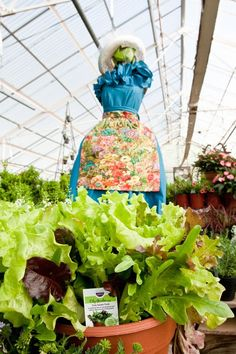 Dress Your Salad shop.