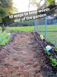 Keep weeds out of your garden