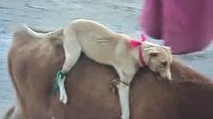 Petizione · Detengan este maltrato animal en Perú · Change.org