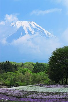 Fuji and colorful field Beautiful Places In The World, Beautiful Space, Monte Fuji, Japanese Colors, Japan Travel, Nature Photos, Scenery, Places To Visit, Around The Worlds