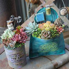 Succulent Gardening, Succulent Pots, Cacti And Succulents, Planting Succulents, Container Gardening, Planting Flowers, Garden Crafts, Garden Art, Garden Paths