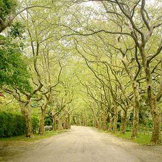 Livingston Road in spring, Bellport