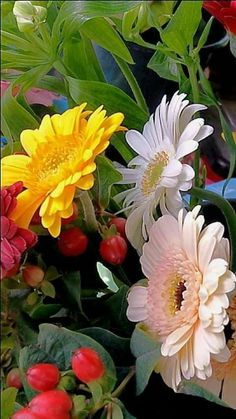 Most Beautiful Flowers, Exotic Flowers, Love Flowers, Colorful Flowers, Purple Flowers, Gerbera Flower, Flower Art, Good Morning Images Flowers, Nature Artwork