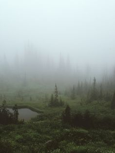 Fogland by Kevin Russ//