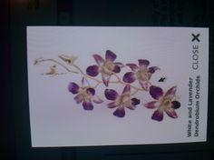 "$3.49/stem 10 stems/bunch --> sold by bunch 1""-2"" diam 4-8 blooms/stem"