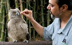 """""""Wildlife SOS co-founder Kartick Satyanarayan feeds a rescued baby dusky eagle owl at the charity's HQ in Agra, India. The bird had had its talons trimmed off by two men who intended to illegally sell its body parts. In India, owls are considered lucky and are still poached for their bones and blood due to outdated religious beliefs. The distressed creature was spotted by a concerned animal lover in a village near Agra, who alerted the charity who are now nursing the small creature...."""""""