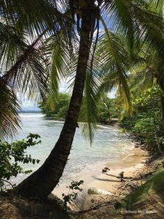 See the beautiful paradise of Bocas del Toro, Panama! And read all about the fun activities there are to do in this region of Panama! Barbados, Jamaica, Santa Lucia, Honduras, Belize, Places Around The World, Around The Worlds, Trinidad E Tobago, Cuba
