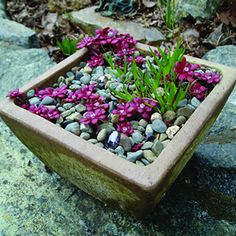Native Container Gardening for Coastal areas