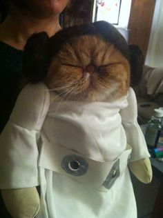And Leia