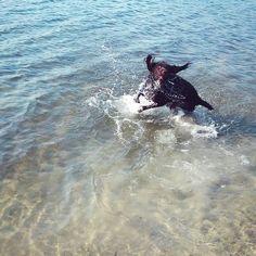 Sezon rozpoczęty ❤ #ivy #ivystyle #ivydog #dog #pies #przyjaciel #gato #ivyświat #ivyworld #slowlife #prostezycie #jezioro #niedziela #sunday #razem #wyżeł #pointer