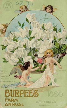 Wings of Whimsy ~ 1896 Burpee's Seed Catalog Seed Illustration, Vintage Illustration, Botanical Illustration, Flower Illustrations, Garden Catalogs, Seed Catalogs, Vintage Ephemera, Vintage Cards, Vintage Labels