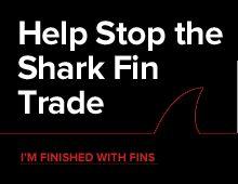 Shark Savers :: The Impact of the Shark Fin Trade
