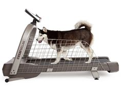 the Pro-Form® Dog Treadmill by Cesar Millan    What an AWSOME idea for thoes busy people that dont want to walk their dog in the dark in winter time.