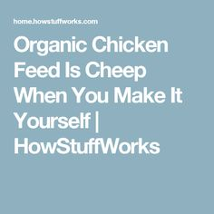 Organic Chicken Feed Is Cheep When You Make It Yourself   HowStuffWorks