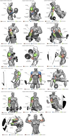 Biceps e Braquial http://www.weightlossjumpstars.com/best-workout-for-your-blood-type/
