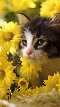 kitten, flowers, yellow, baby