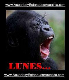 FELIZ COMIENZO DE SEMANA! http://acuariosyestanquesacuatica.com/ #acuarios #estanques #lunes