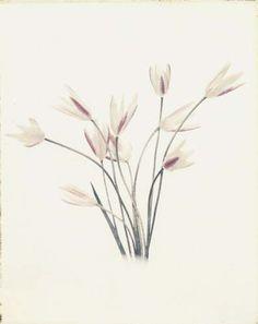 "Flowers in Neutral Moment ""Tulip"" Polaroid image transfer 8x10 archival pigment print Photo by Soichi Oshika"