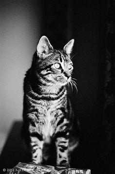 Alert :-) Kitty