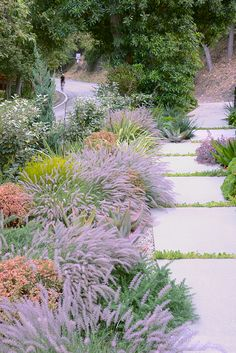 Mandeville Canyon garden by Elysian Landscapes