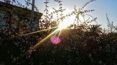 Sunshine 🎵