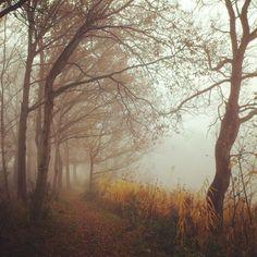 Path along Moekesgat #mist #nederland #terapel #westerwolde