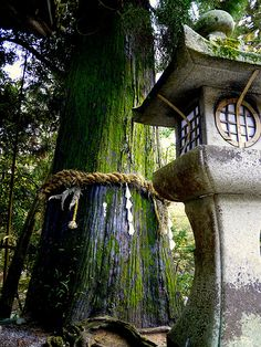 Shinto forest shrine~P1030576