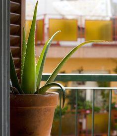 Ces plantes à cultiver et utiliser pour booster votre #santé