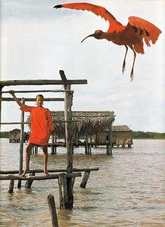 Venezuela_Laura Alvarez_ Vogue Italia_1976_ Photo Gian Paolo Barbieri 11