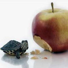 what apple? hehe